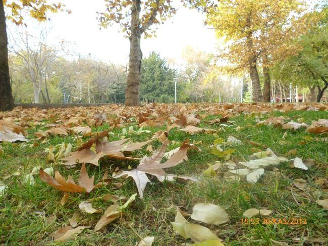 Kurtuluş Park Ankara autumn foliage Ağaçlar ♥♡♥ Trees Gok Sky Doğa Nature Sonbaharyaprakları Sonbahar Yeşil Doğa Autumn colors