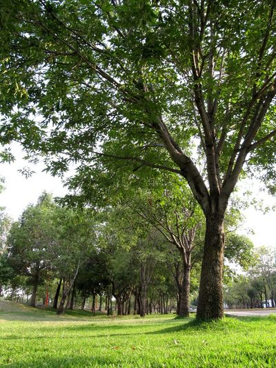 #green #mx Tree Branch Park - Man Made Space Sky Grass Green Color