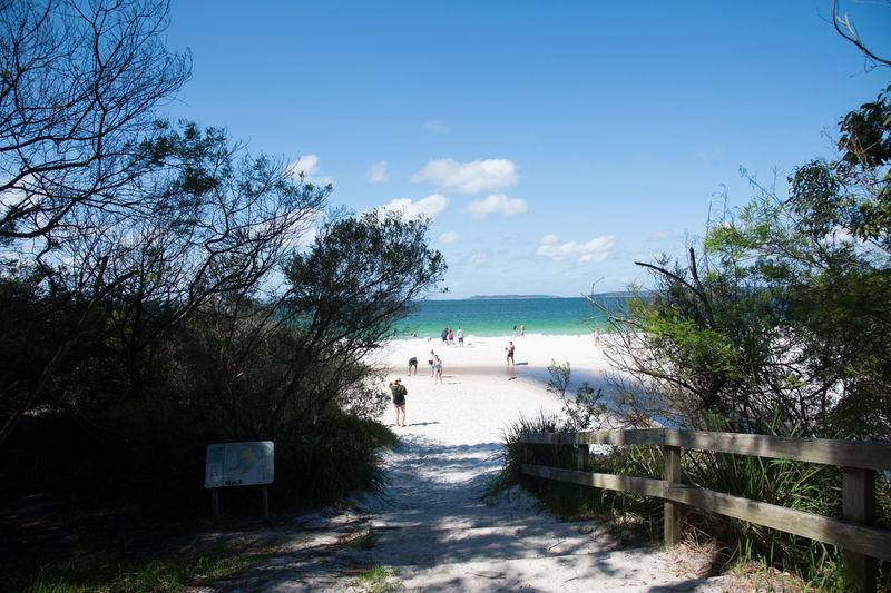 Australia Beach Beauty In Nature Blue Day Jarvis Bay Nature Outdoors Sea Sky Tree Vacations Water White Sand