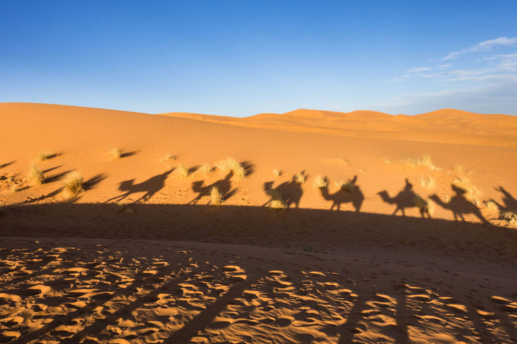 Shadow Of Camels On Desert Against Blue Sky