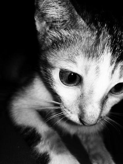 Kucingku First Eyeem Photo