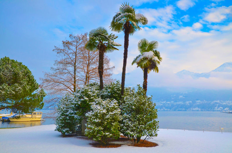 Palm Trees with Snow and Alpine Lake Maggiore with Mountain in Ticino, Switzerland. Plant Sunny Winter Beauty In Nature Cloud - Sky Cold Temperature Day Environment Lake Lake Maggiore Mountain Nature No People Non-urban Scene Outdoors Palm Tree Plant Scenics - Nature Sky Snow Swiss Alps Tranquil Scene Tranquility Tree Waterfront