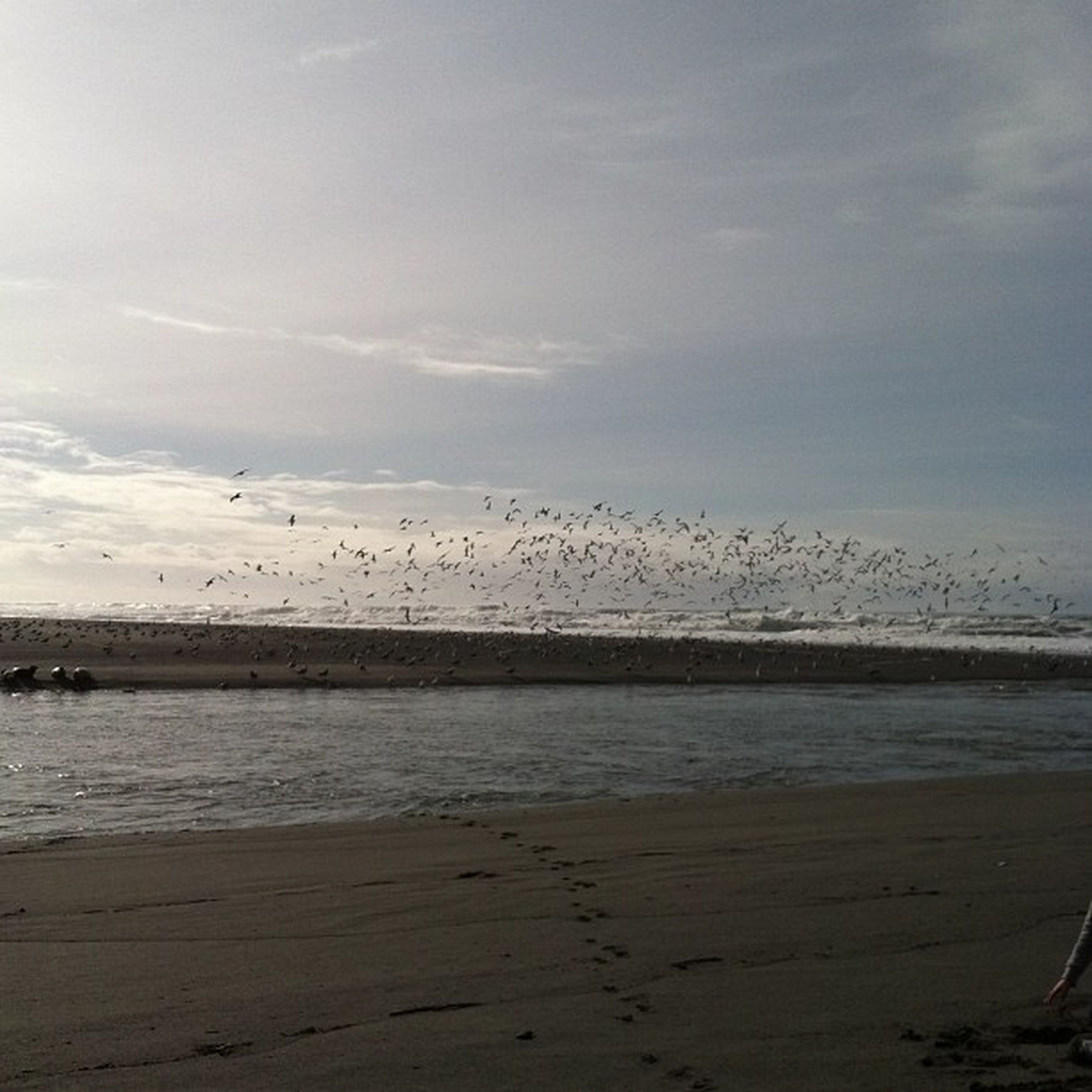 bird, animal themes, animals in the wild, water, wildlife, sea, sky, beach, flying, nature, tranquil scene, tranquility, flock of birds, scenics, cloud - sky, beauty in nature, seagull, shore, horizon over water
