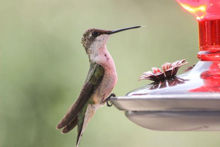 Bird on bird feeder