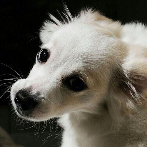 Sasha  Crazydog Cute Pets Dog