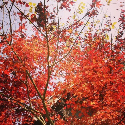 秋深く 紅葉綺麗だなぁ。 三連休天気に恵まれついてる。 糸島 紅葉 三連休 紅