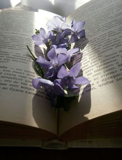 Close-up of purple flower on book