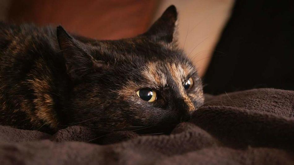 Cat Lovers Cats Cat♡ Housecat
