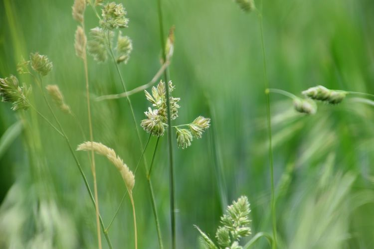 Close-up of grass plants on field