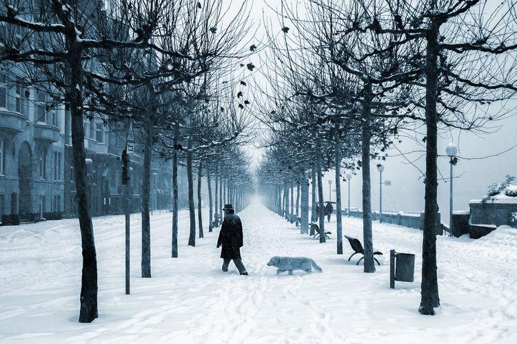 Düsseldorf, Germany, Rheinufer Cold Deutschland Dog Düsseldorf Germany Hund It's Cold Outside NRW Platanen Rhein Rheinufer Schnee Winter Blue White