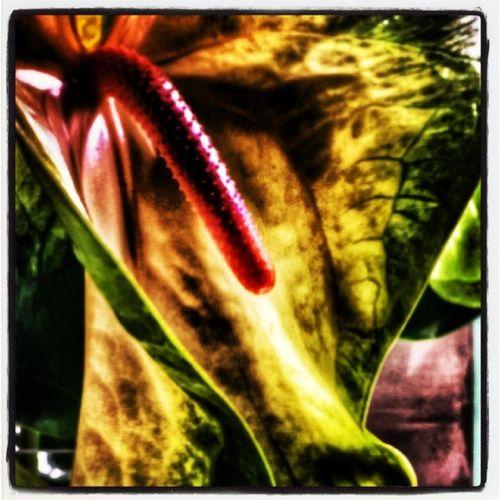 Flores Flor Eslahoradelgintonik Pasqualecaprile soledad