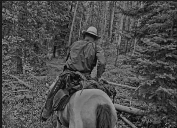 Woods Cowboy And His Horse Trail Ride