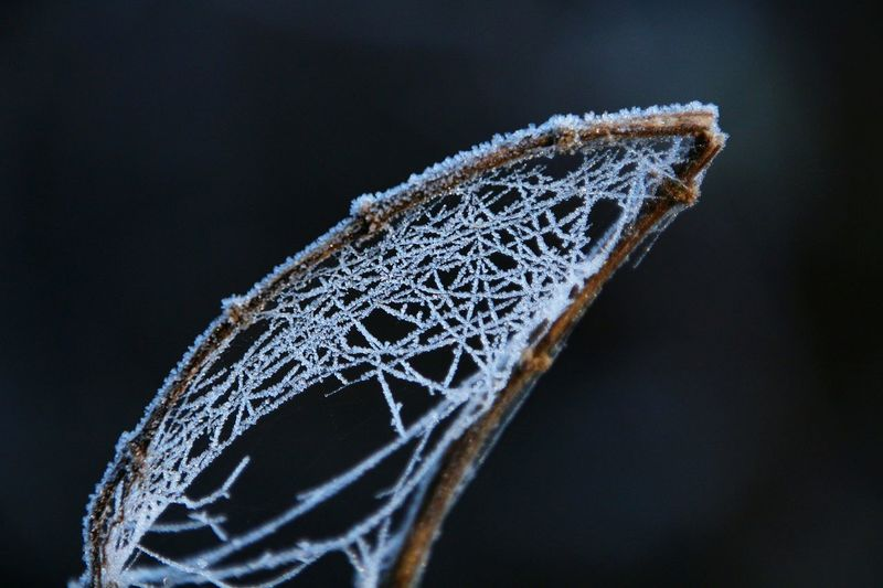 Water Close-up No People Black Background Day Frosty Mornings Eyem Best Shots Cold Temperature Fragility Spiderweb In Morning Dew Web