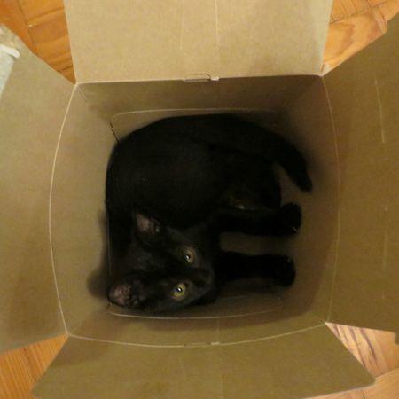 ...inscattolati... Kitty Catsofinstagram Catoftheday Gattogram