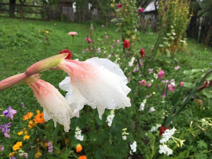 Flower Drop BYOPaper!