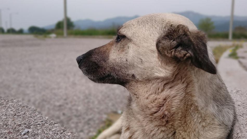 Pets Dog Animal Dog Love Dog Posing Dogoftheday Dog Life Dog Portrait
