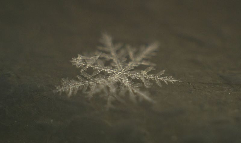 And again snowflakes. Canon Winter Sony Macro Photography Macro Snowflake ❄ Ethno-online Art Instagram Arte_of_nature Picture_to_keep No People Celebration Christmas Snowflake Indoors  Close-up Day