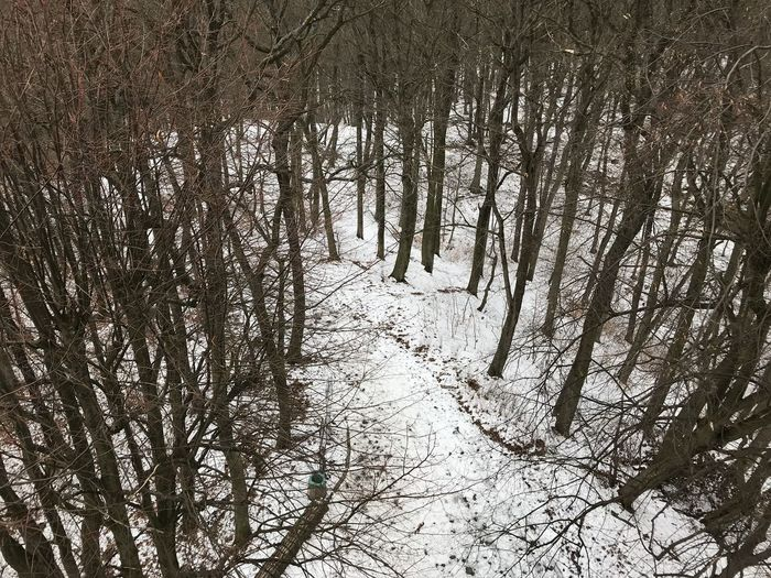 Bare Tree Beauty In Nature Branch Cold Temperature Day Forest Land Nature No People Non-urban Scene Outdoors Plant Snow Tranquil Scene Tranquility Tree Tree Trunk Treelined Trunk Winter WoodLand