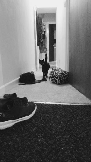 Home Waysofseeing Cat Kitty My Home My Child Long Day Happiness Smile Lowfi Low Fi Bristol Black-and-white Dilla Cat Face Walk Away Hallway Landing EyeEmNewHere Bedroom Full Length Home Interior Sitting Silhouette Entryway Doorway Door Open Door Entrance Front Door