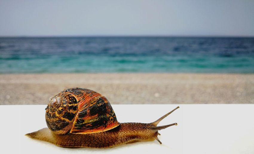 Close-up of snail on beach against clear sky
