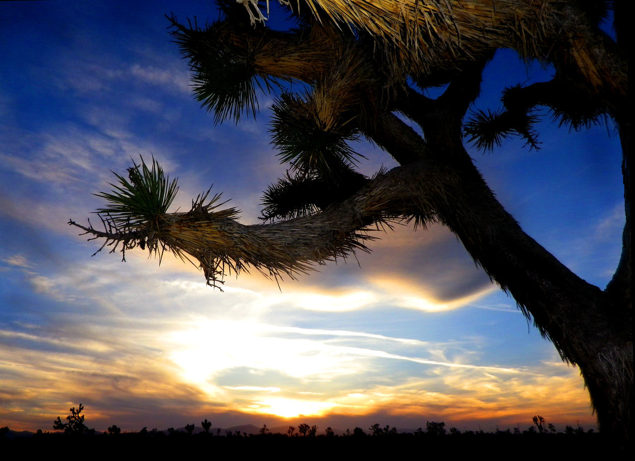 tree, sky, sunset, cloud - sky, palm tree, silhouette, low angle view, beauty in nature, nature, scenics, no people, tranquil scene, tree trunk, outdoors, growth, tranquility, day