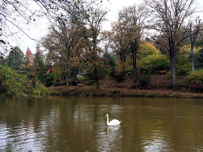 Turkey Istanbul Sarıyer AtaturkArboretumu Autumn Peace And Quiet Relaxing Nature Colors Landscape