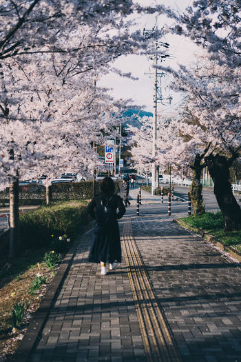 Rear view of woman walking on footpath by cherry in city