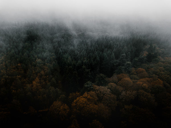 Autumn Forest drone view Tree Fog Plant Scenics - Nature Forest Tranquility No People Beauty In Nature Tranquil Scene Land Nature Environment Day Non-urban Scene WoodLand Landscape Outdoors High Angle View Growth Ecosystem