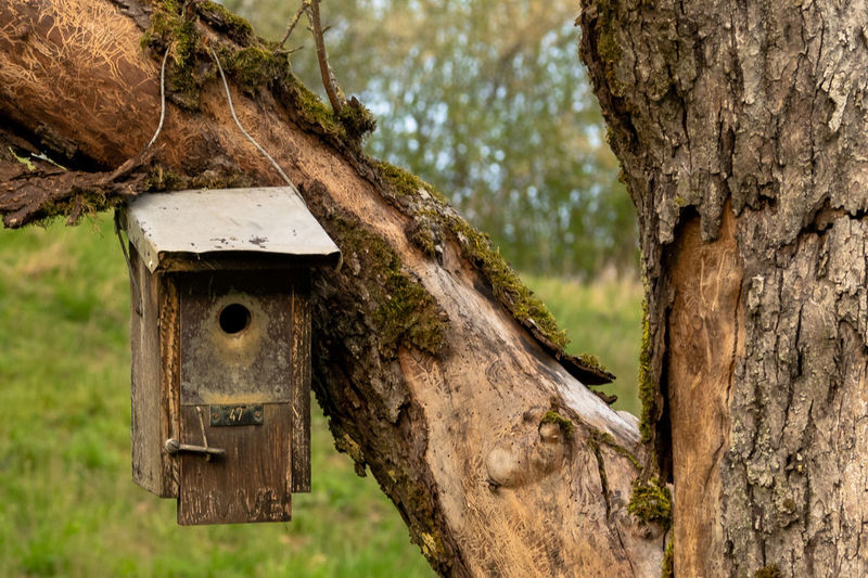 Close-up of birdhouse on tree trunk