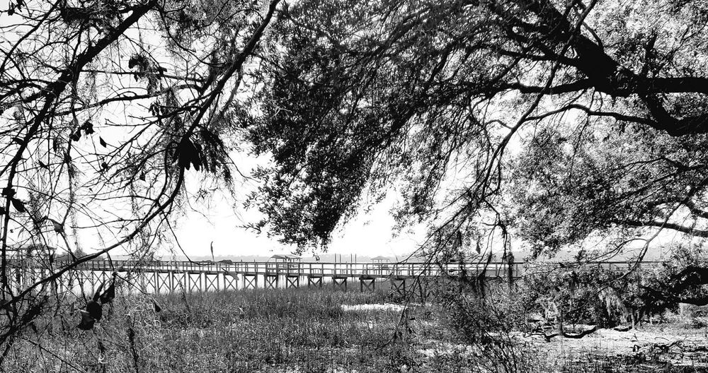 Tree No People Outdoors Sky Nature Growth Branch Day Charleston South Carolina Blackandwhitephotography Beauty In Nature Agriculture Landscape Leaves🌿 Waterfront Peaceful View Peace And Quiet Reflection Bridge Marsh Tranquil Scene Calm Water