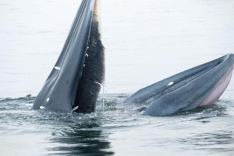 Whale Animals