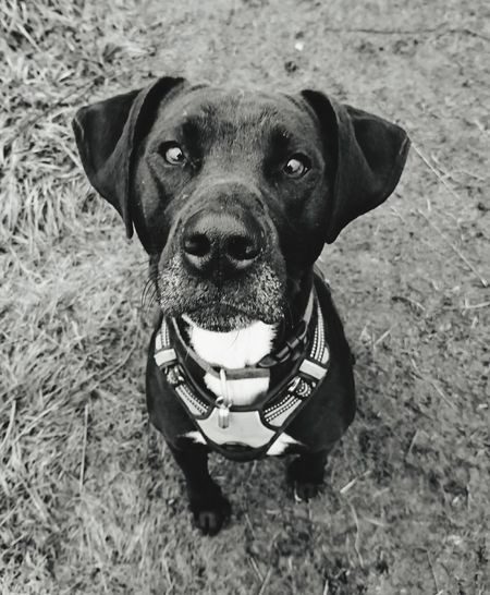 Dogslife DogLove Dog Love Dogs Of EyeEm Dogs_of_instagram Dogsareawesome Dog Walking Doglovers Dog❤ Dog Photography Canine Photography Canine Love :)