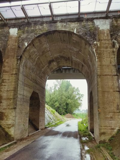 Tree Bridge - Man Made Structure Road Architecture Built Structure Under Underneath Rainfall Passageway Below Arch Bridge Viaduct Tunnel