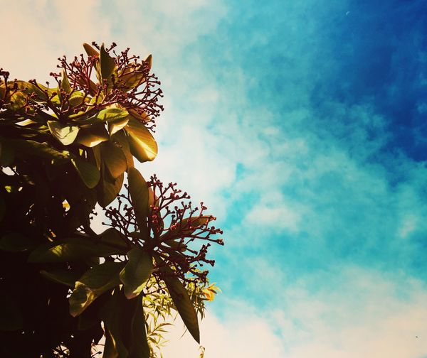 Flower Growth Sky Low Angle View Nature Beauty In Nature Tree Day Petal Cloud - Sky No People Fragility Plant Leaf Freshness Outdoors Close-up Flower Head Blooming Branch