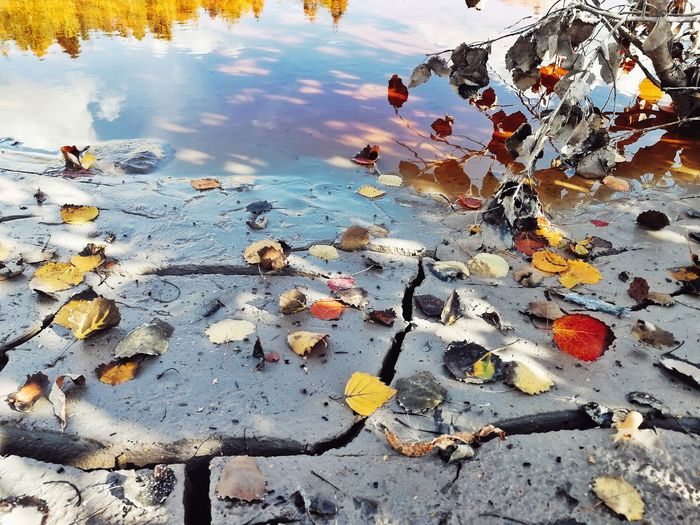 High angle view of leaves floating on lake during winter