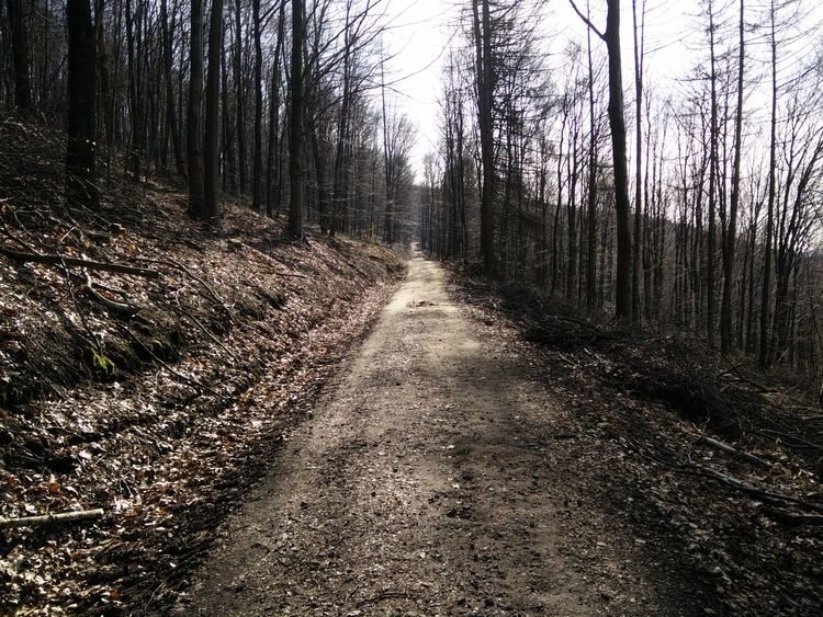No People Nature Textures Outdoors Nature Solitary Forest Forest Path Road Lonely Loneliness Lonelyroad Lonely Road Autumn