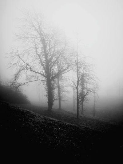 Fog Nature Beauty In Nature Landscape Tree Scenics Tranquil Scene