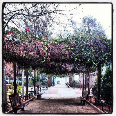 Jardin Garden Ciudad City València Valenciagram Parque  Park