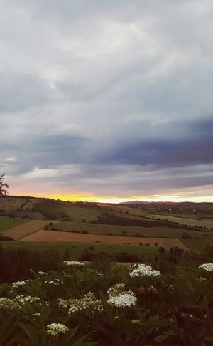 Field Dramatic Sky Sunset Cloud - Sky Atmospheric Mood Scenics Social Issues Tranquil Scene Non-urban Scene Beauty In Nature Rural Scene Nature Agriculture Landscape Sunlight Tranquility Weather No People Gold Colored Storm Cloud