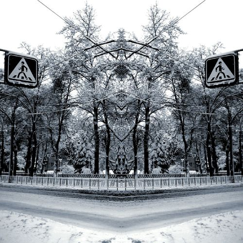 Road Sign Road Tree Winter Cold Temperature Snow Day Bare Tree Outdoors No People Freezing ❄ One Way Basketball Hoop Sky Basketball - Sport Architecture City
