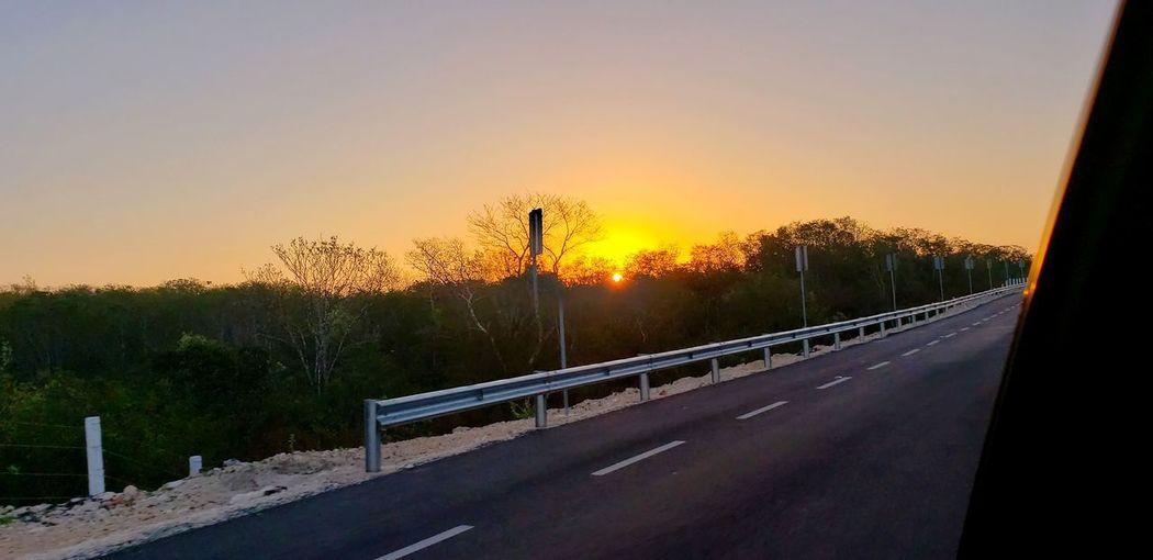 The Mobile Photographer - 2019 EyeEm Awards Tree Sunset Road Sunlight Sky