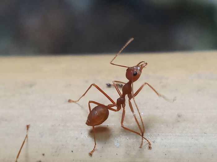 EyeEm Selects Full Length Insect Spider Ant Close-up Animal Themes Leg Foot