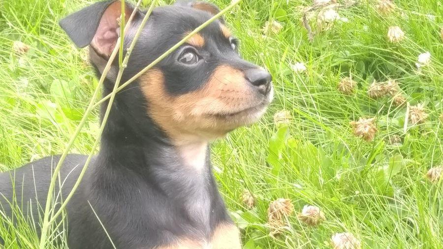 Bear. New Home. Puppy🐶 Puppies Hello WorldPooch Brown Washington Summertime