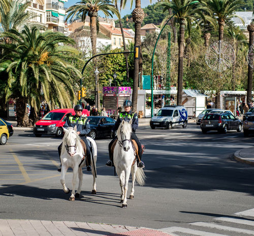 Malaga, Spain - December 30, 2013: Mounted police patrol at Malaga street. Andalusia, Spain Andalucía City Malaga Mediterranean  Patrol  Policeman Rider SPAIN Security Uniform Civil Europe Guard Horse Mammal Mounted Police Outdoors Palm Trees Patrolling People Police Safety Street Sunny Day Traditional