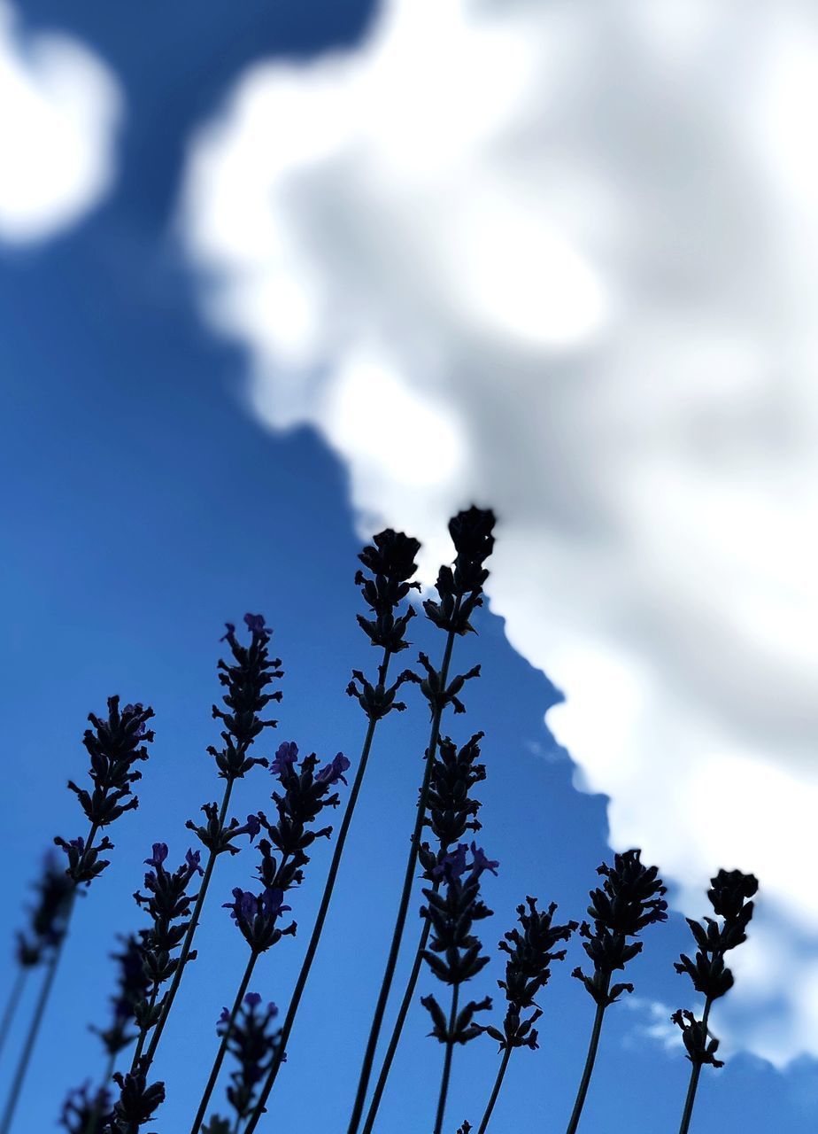plant, sky, low angle view, growth, tree, nature, day, no people, beauty in nature, cloud - sky, focus on foreground, blue, tranquility, outdoors, flower, silhouette, flowering plant, branch, close-up, scenics - nature, coniferous tree