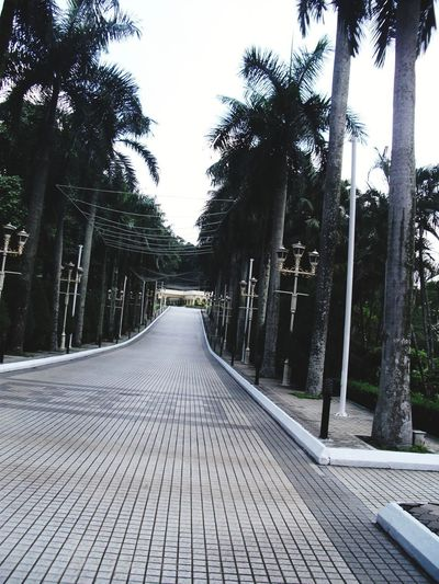 Empty footpath along palm trees
