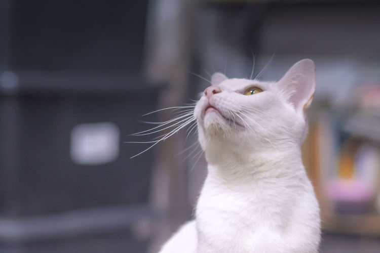 Close-up of cat looking up