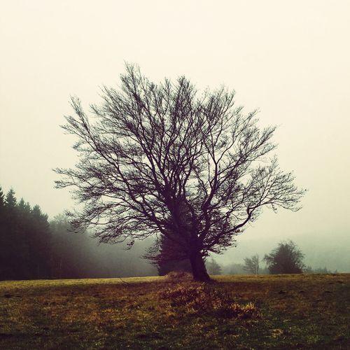 Foggy Day Hiking