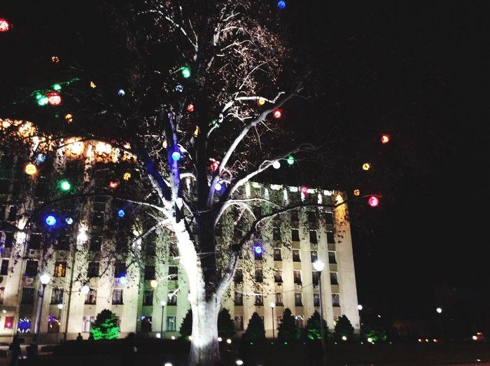 Trees Christmas Tree Streetphotography ?