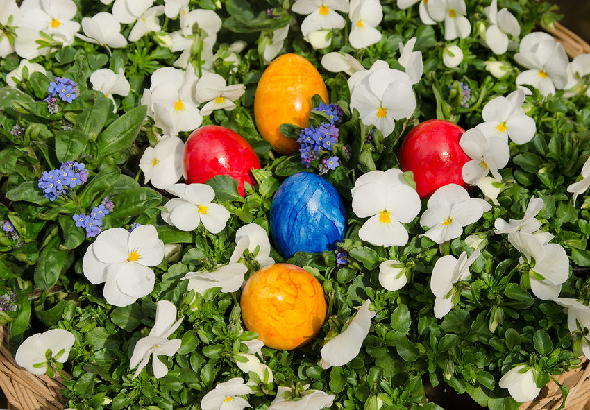 Bald ist Ostern … Day Easter Easter Egg Flower Food And Drink Forget-me-nots Fragility Grass Green Color Multi Colored Nature No People White Pansy